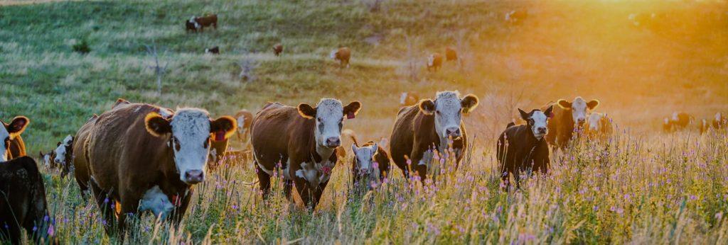 JD Redhouse Livestock Supplies Banner Image