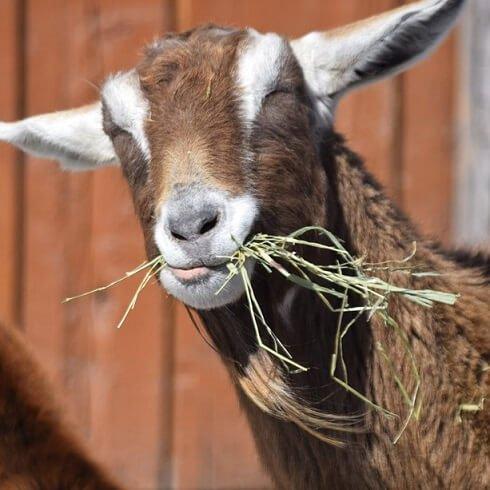 JD Redhouse Livestock Food & Supplies Image