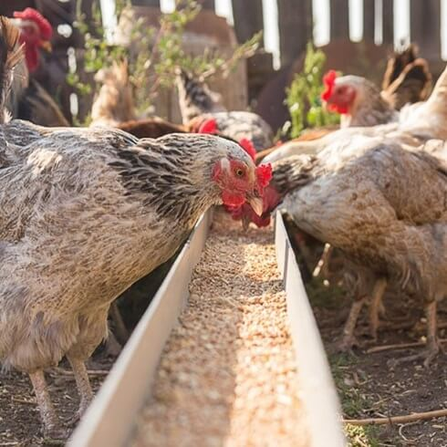 JD Redhouse Poultry Food & Supplies Image